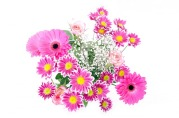 flowers-163716_640