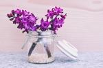 hyacinth-747157_1920